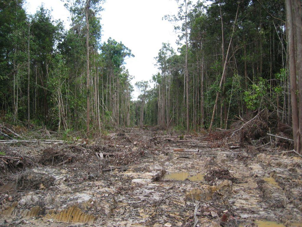 Restorasi Habitat Orangutan Indonesisa REDD+