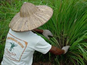 Borneo Botanicals